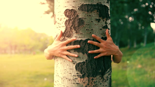 vidéos et rushes de embrasser un arbre - affectueux