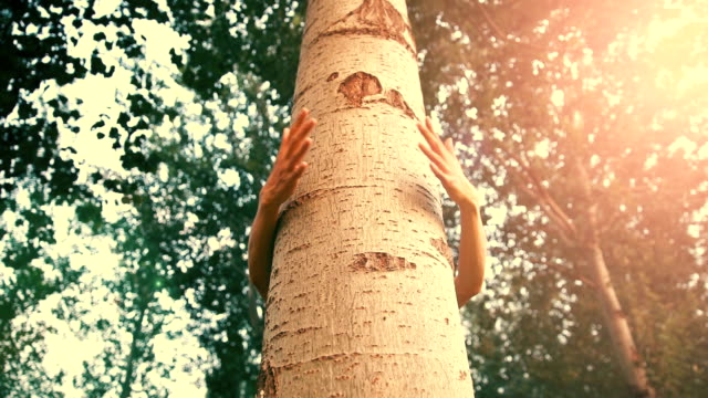 embrace a tree - affectionate stock videos & royalty-free footage