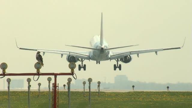 Embraer Jet Avión aterrizando y un halcón