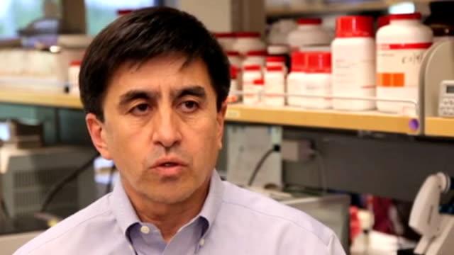 embryonic stem cells development in medical human cloning; dr shoukrat mitalipov interview sot - genetisk forskning bildbanksvideor och videomaterial från bakom kulisserna