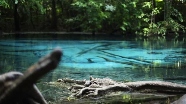 emerald pool (sra morakot)- blue pool (sra nam phut) purity nature water in krabi thailand - krabi province stock videos & royalty-free footage