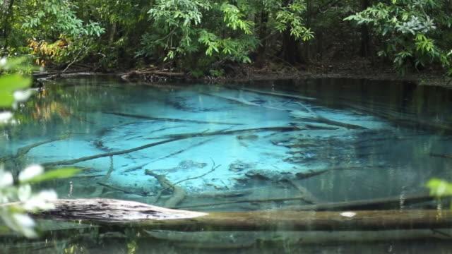 vidéos et rushes de piscine emerald (sra morakot)-bleu piscine (sra nam phut) la pureté de la nature de l'eau à krabi, thaïlande - arbre tropical