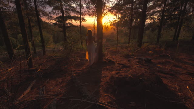 Emerging from the forest at dawn
