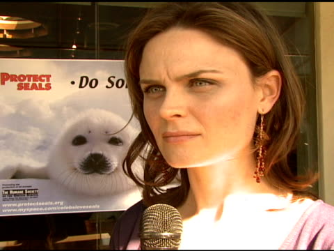emily deschanel on feeling compelled to stop the seal hunt, on boycotting canadian seafood in protest of their government subsidies of seal hunting,... - aquatic organism stock videos & royalty-free footage