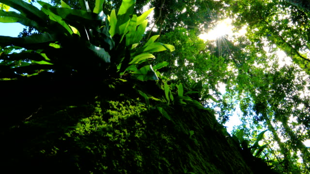 emotional sun watching through trees and leaves, 4k. - fern stock videos & royalty-free footage