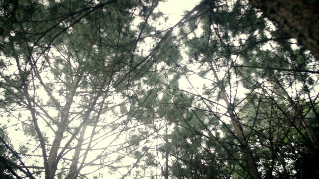 vídeos y material grabado en eventos de stock de emocional sol mirando a través de árboles y hojas - mancha solar