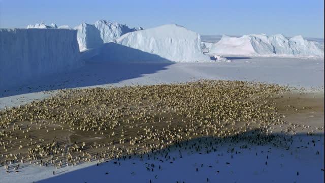 Emperor Penguin breeding colony in Antarctica.