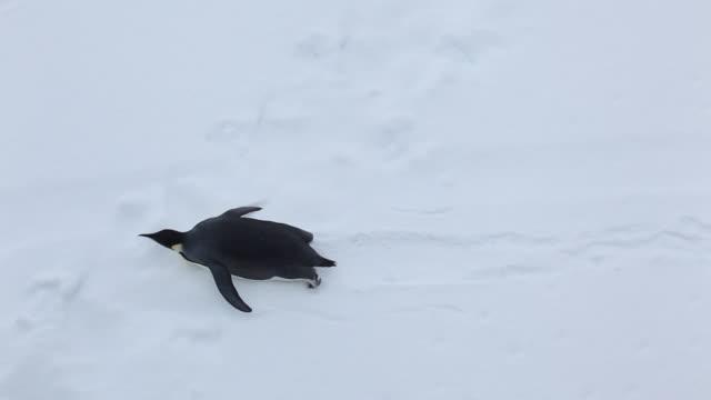 emperor penguin - 滑る点の映像素材/bロール