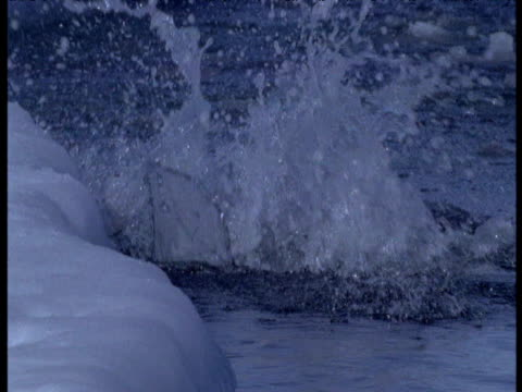 Emperor penguins dive into water, Terra Nova Bay, Antarctica