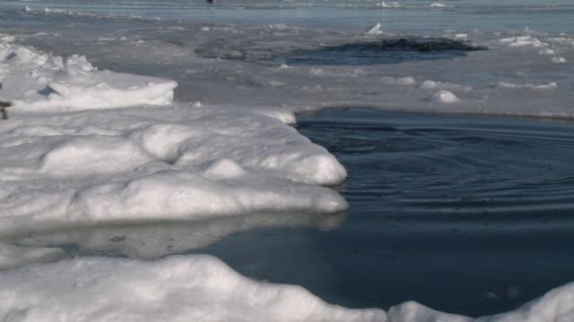 emperor penguins (aptenodytes forsteri) exiting water with group in ice hole behind, cape washington, antarctica - 豊富点の映像素材/bロール