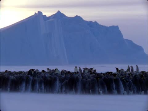vídeos y material grabado en eventos de stock de emperor penguins huddle together in a colony during storm in antarctica. - colonia grupo de animales