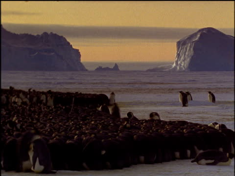"""vidéos et rushes de emperor penguins huddle together to keep warm and move in a circle to keep those at the outside moving inward, stunning skyline between mountains of ice in background - """"bbc natural history"""""""