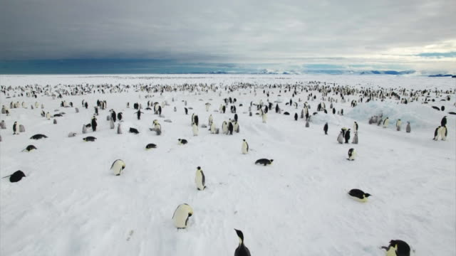 emperor penguins in antarctica - penguin stock videos & royalty-free footage