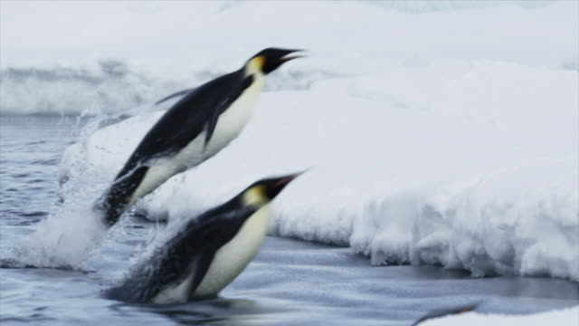 emperor penguins jumping out of water - jumping stock videos & royalty-free footage