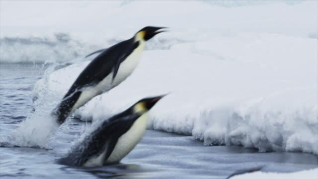 emperor penguins jumping out of water - hoppa bildbanksvideor och videomaterial från bakom kulisserna