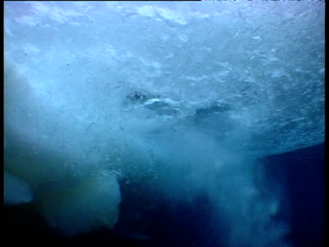 emperor penguins leap from water creating a blizzard of ice shards, terra nova, antarctica - emperor stock videos and b-roll footage