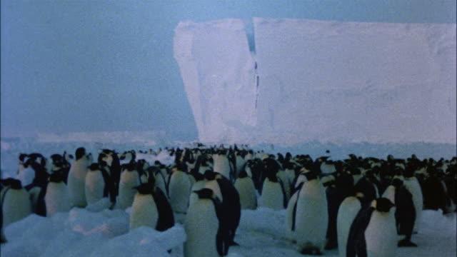 ms, emperor penguins on snow, antarctica - establishing shot stock videos & royalty-free footage