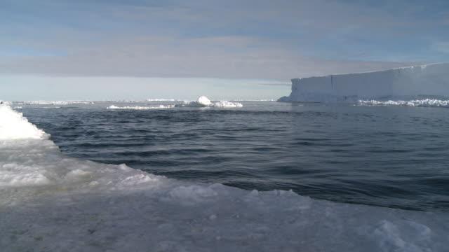emperor penguins (aptenodytes forsteri) porpoising in wide ice hole, some exit water, cape washington, antarctica - cape washington stock videos & royalty-free footage