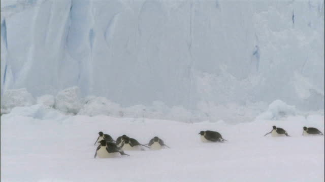 emperor penguins sliding - penguin stock videos & royalty-free footage