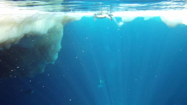 emperor penguins (aptenodytes forsteri) surfacing and diving, underwater, cape washington, antarctica - cape washington stock videos & royalty-free footage