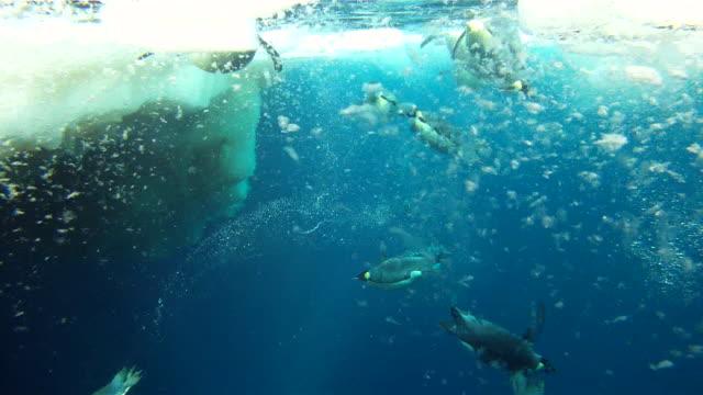 emperor penguins (aptenodytes forsteri) surfacing, underwater, cape washington, antarctica - cape washington stock videos & royalty-free footage