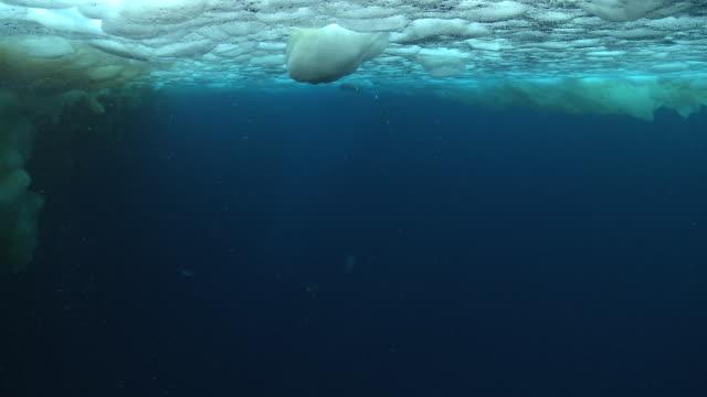 emperor penguins (aptenodytes forsteri) swimming under sea ice, underwater, cape washington, antarctica - cape washington stock videos & royalty-free footage