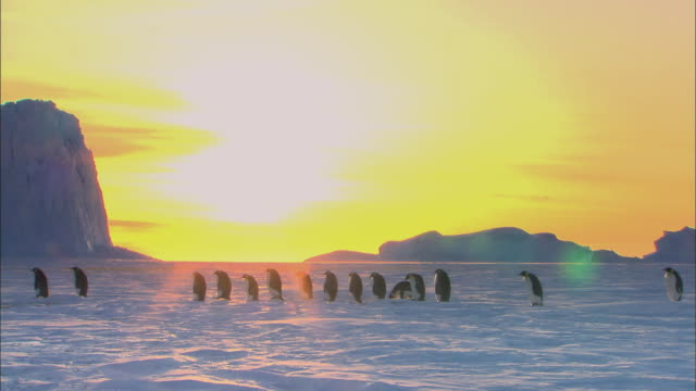 stockvideo's en b-roll-footage met emperor penguins walking in a line at sunset - geel