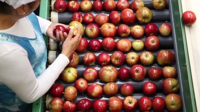 Employees check for imperfections on Gala Apple production line at Rasch Family Orchards packing facility in Grand Rapids Michigan US on Wednesday...
