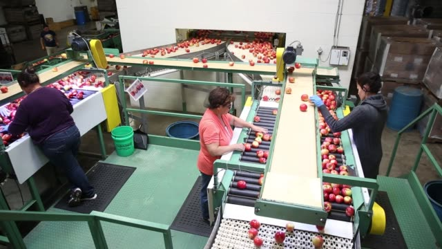 Employees check for imperfections on Honeycrisp Apple production line at Jack Brown Produce in Sparta Michigan US on Wednesday Sept 27 2017...