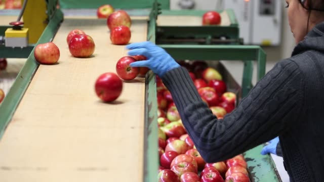 vídeos y material grabado en eventos de stock de employees discard poor quality honeycrisp apples on processing line at jack brown produce in sparta, michigan, u.s., on wednesday, sept. 27, 2017.... - calidad