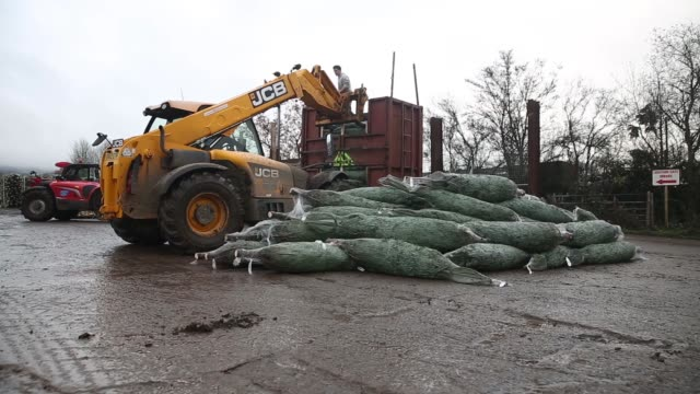 employees load christmas trees into a trailer at santa fir christmas tree farm near guildford uk on monday dec 7 freshly cut christmas trees are... - cut video transition stock videos and b-roll footage