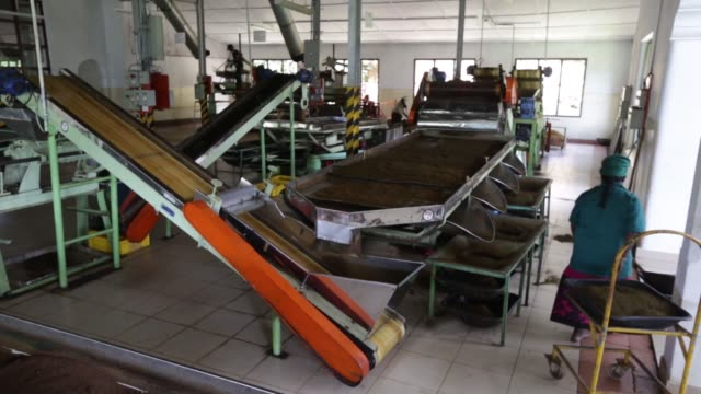 employees pour tea leaves into a rolling machine at the dilmah dunkeld tea factory at the dunkeld tea estate operated by mjf holdings ltds dilmah tea... - drying rack stock videos and b-roll footage