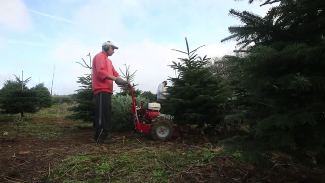 Employees prepare the netting machine for harvested trees at Santa Fir Christmas Tree Farm near Guildford UK on Monday Dec 7 An employee uses a...