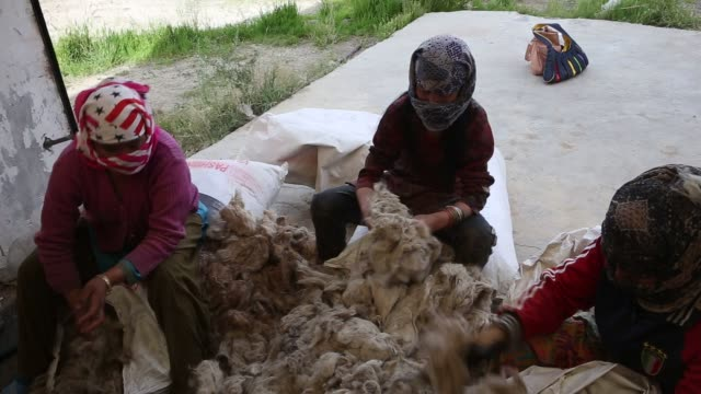 employees supervise the humidfied and temprature controlled de hairing process as scoured pashmina is further processed at the pashmina processing... - plant process stock videos & royalty-free footage