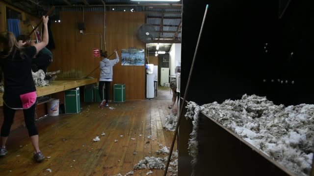 Employees throw loose pieces of wool into a bale in the shearing shed at the Lal Lal Estate sheep farm owned by Tianyu Wool Industry Co in the town...