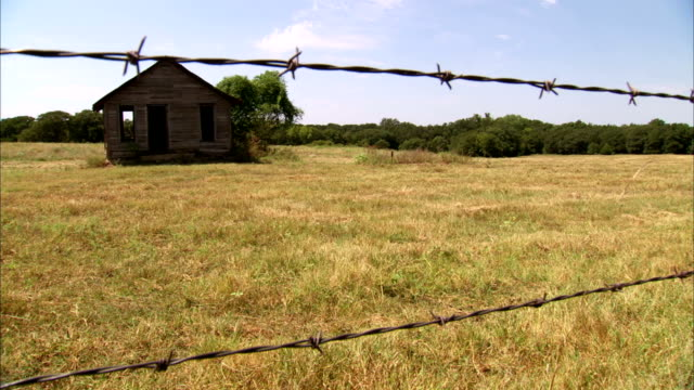 empty abandoned barn house on field two herds of cattle standing under shade of two trees on field frame two barbed wires fg clear skies above bovine... - barn stock videos & royalty-free footage