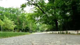 Empty alley in a city park in the city of Odessa in the Ukraine among the trees.