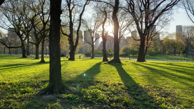 empty area in central park in manhattan - tourist stock videos & royalty-free footage
