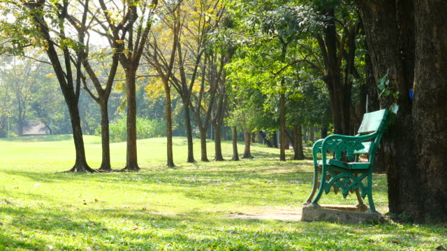 empty bench in green park at morning - bench stock videos & royalty-free footage