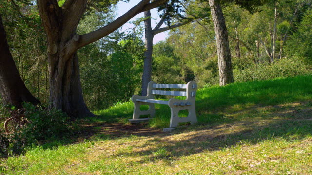 WIDE ZOOM IN empty bench under tree on hill in park