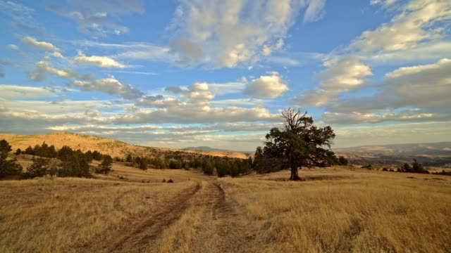 Empty dirt road in a desert field next to old growth western juniper tree