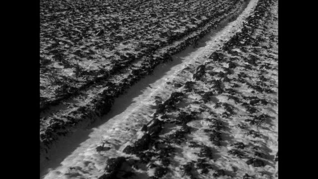 montage empty farm fields in winter, farmers using machinery for seeding in the spring / east anglia, united kingdom - east anglia stock videos & royalty-free footage