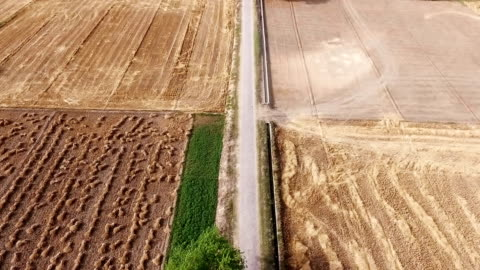 empty field after wheat crop harvesting during summer season. - harvesting stock videos & royalty-free footage