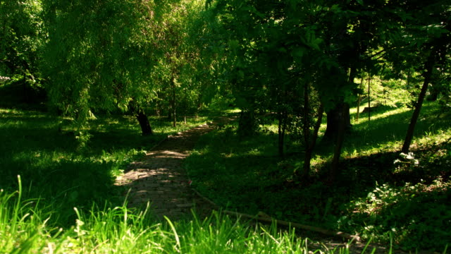 Empty footpath in green summer park