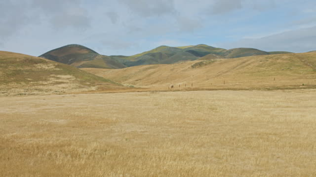 empty pasture - santa barbara california stock videos & royalty-free footage