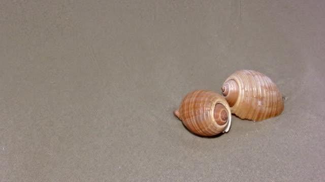 vídeos de stock, filmes e b-roll de concha de caracol vazio - caracol