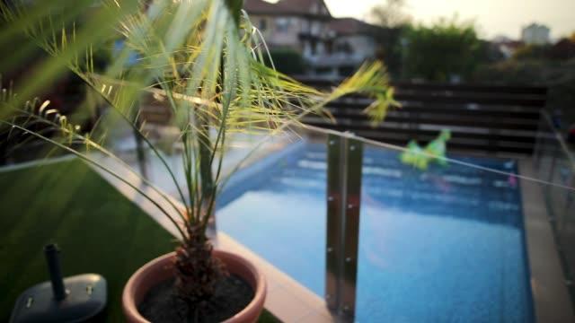 vídeos de stock, filmes e b-roll de piscina vazia no quintal da casa de campo luxuosa com a palma no primeiro plano - sacada