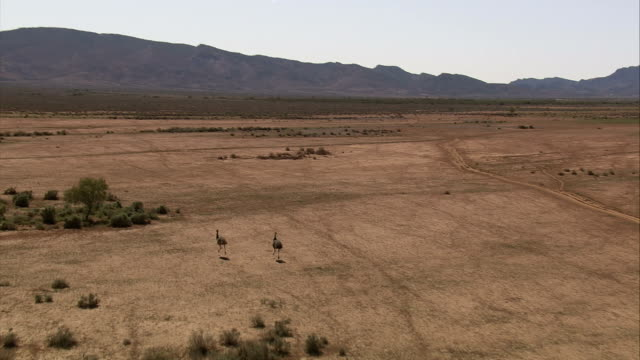 Emus run through a barren flood plain near mountains in the Australian outback of northern Queensland. Available in HD.