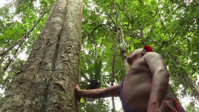 en el corazon de la selva amazonica brasilena los indigenas waiapi no dependen del comercio ni del dinero para vivir - tribu sudamericana video stock e b–roll