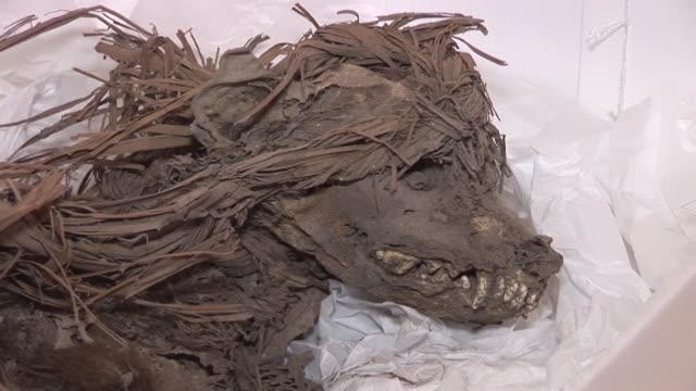 En el principal zoologico de Peru aun yacen misterios de los antepasados